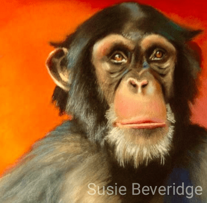 Pastel chimp study sketched