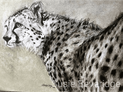 Cheetah charcoal sketch