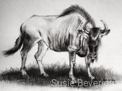 Wildebeest sketched at the Mount Kenya Wildlife Conservancy